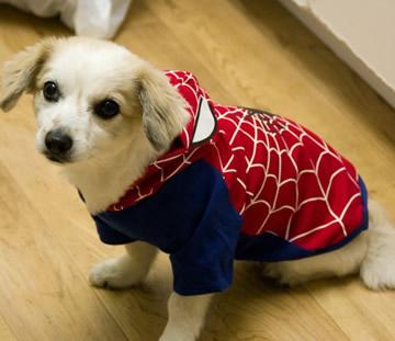 เสื้อผ้าสุนัข Spiderman