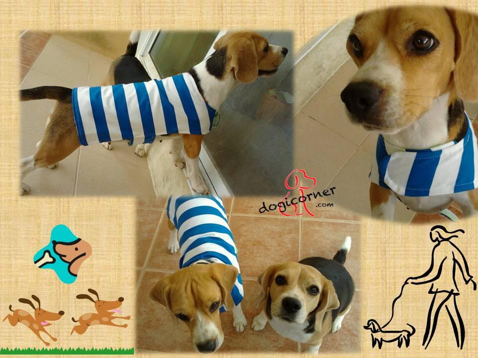 เสื้อผ้าสุนัข - บีเกิ้ล